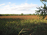 520 Acres + 1/2 seller's mineral rights